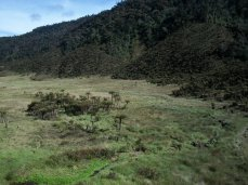 Prestine Vegetation at the Boarder of Kosipe and Sopu - Goilala (63)